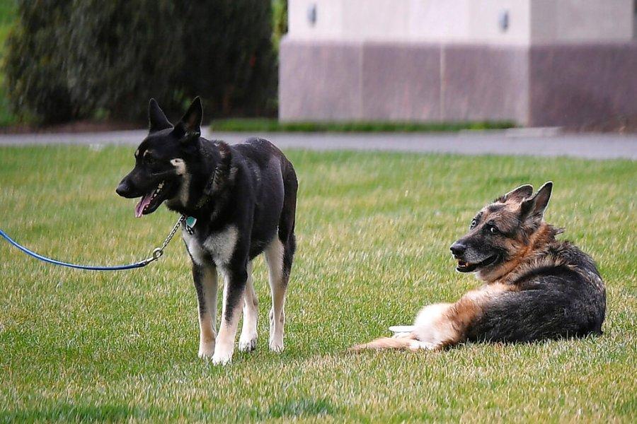 President Biden's dogs