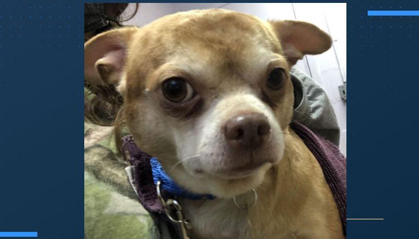 Dog up for adoption