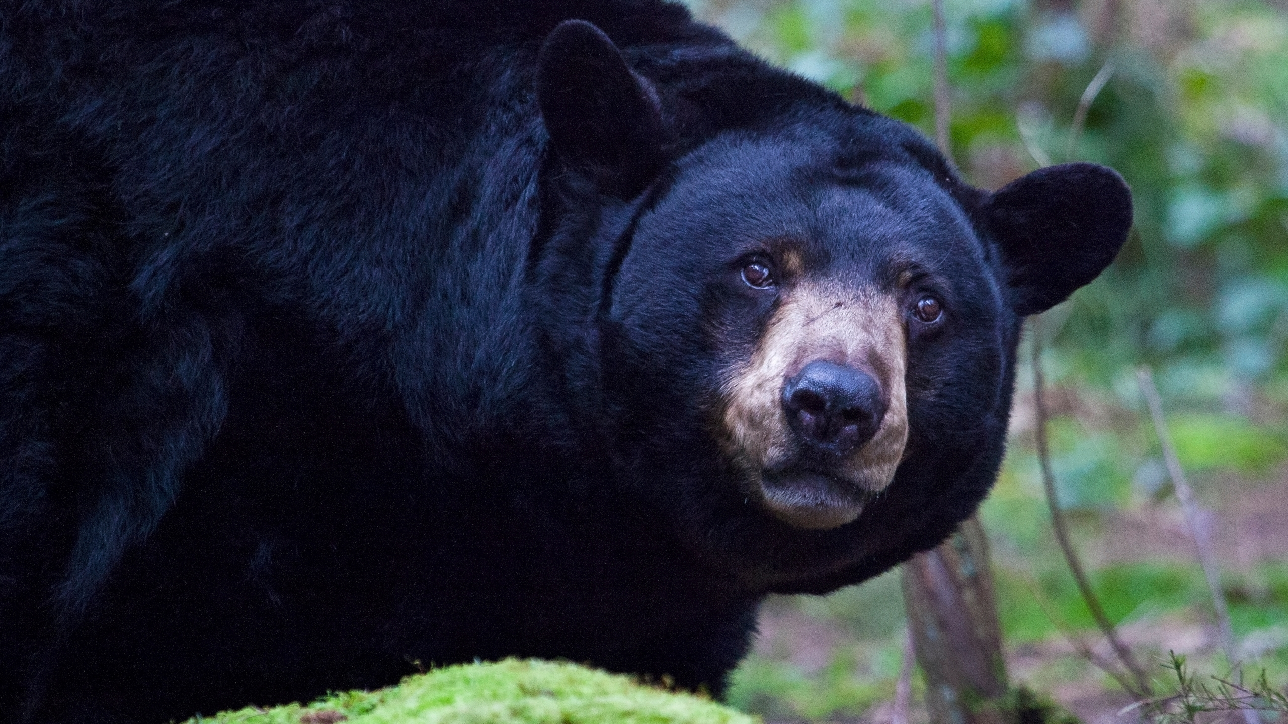 Stock photo of black bear